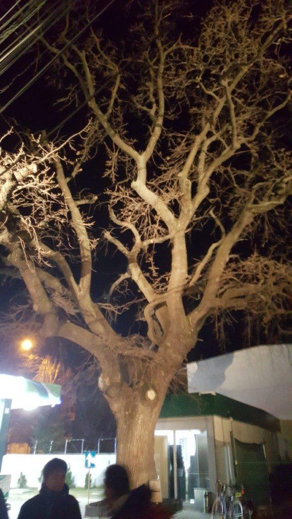 Tur de noapte - Stejarul de pe Horei