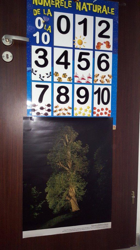 Tur de noapte- Stejarul de pe Horei